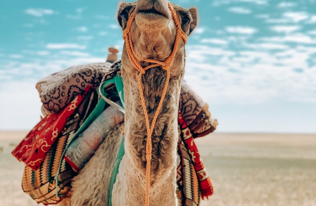 How a Camel Taught Me to Deal with Anxiety